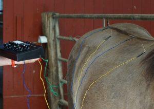 elektroakupunktur pferd